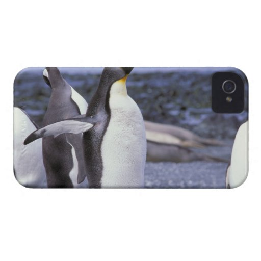 Australia, Macquarie Island, Buckles Bay. King Case-Mate Blackberry Case