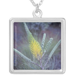 Australia, NT, near Ayers Rock. Springtime bloom Square Pendant Necklace