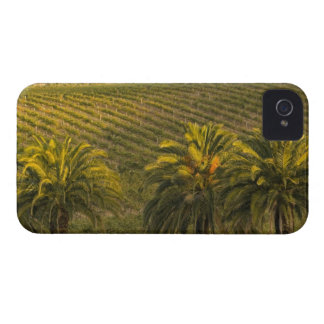 Australia, South Australia, Barossa Valley, Blackberry Cases