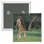 Australia, Vic. Kangaroo on the Anglesea Golf 15 Cm Square Badge
