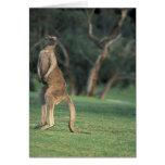 Australia, Vic. Kangaroo on the Anglesea Golf Greeting Card