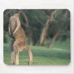Australia, Vic. Kangaroo on the Anglesea Golf Mouse Pad