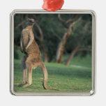 Australia, Vic. Kangaroo on the Anglesea Golf Silver-Colored Square Decoration