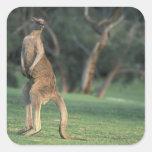 Australia, Vic. Kangaroo on the Anglesea Golf Square Sticker