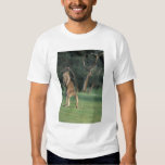 Australia, Vic. Kangaroo on the Anglesea Golf Tees