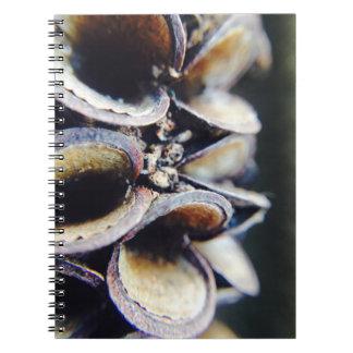 Australian banksia notebook