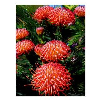 Australian Beauty Postcard