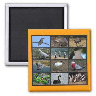 Australian Birdwatchers Collage Magnet