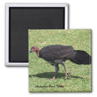 Australian Brush (Bush) Turkey Square Magnet