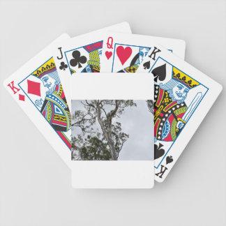 AUSTRALIAN BUSH QUEENSLAND AUSTRALIA BICYCLE PLAYING CARDS