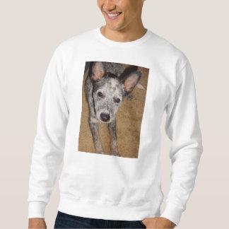 Australian_Cattle_Dog_blue puppy Sweatshirt