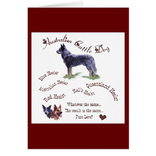Australian Cattle Dog Gifts Card
