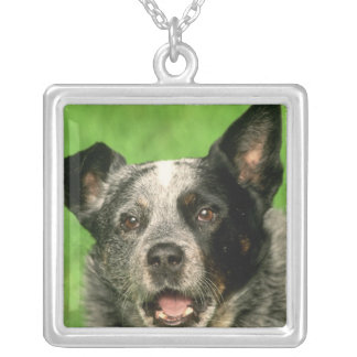 Australian Cattle Dog Necklace
