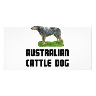 Australian Cattle Dog Picture Card
