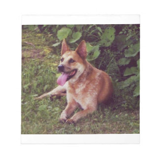 australian cattle dog red laying notepad