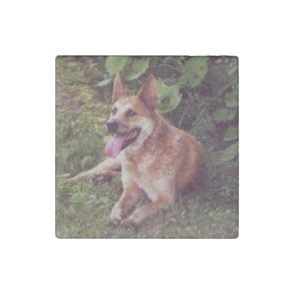 australian cattle dog red laying stone magnet