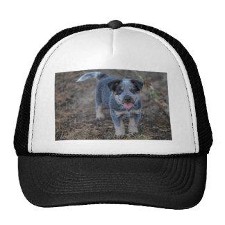 Australian Cattle Puppy Dog Cap