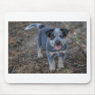Australian Cattle Puppy Dog Mouse Pad
