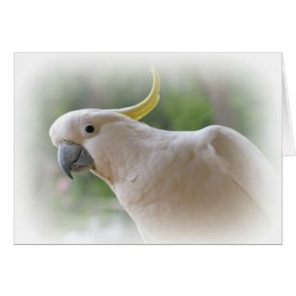 Australian Cockatoo Card