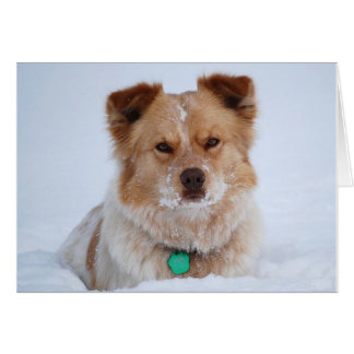 Australian Dog in Snow-add your text Greeting Card