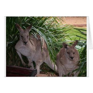 Australian Eastern Grey Kangaroo Card