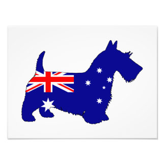 Australian Flag - Scottish Terrier Photo