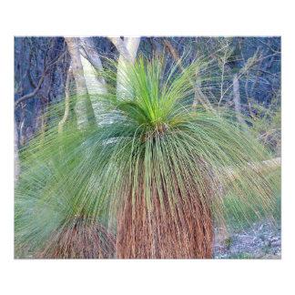 Australian Grass Tree Photographic Print
