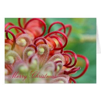 Australian Grevillea Christmas Card