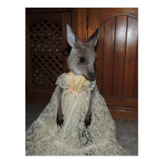Australian Kangaroo Joey Postcard