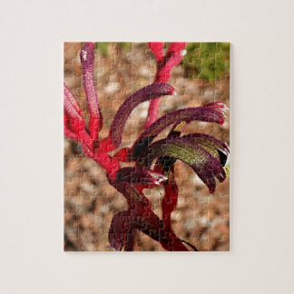 Australian Kangaroo Paw flower in bloom 2 Puzzle