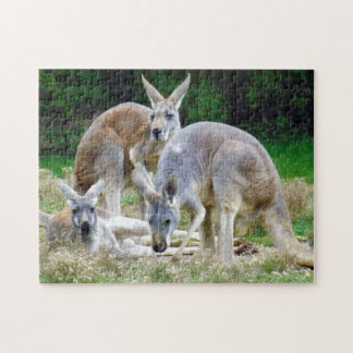 Australian Kangaroos Relaxing in the Sun Puzzles