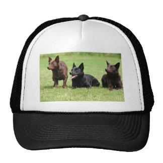 Australian Kelpie Puppies Cap