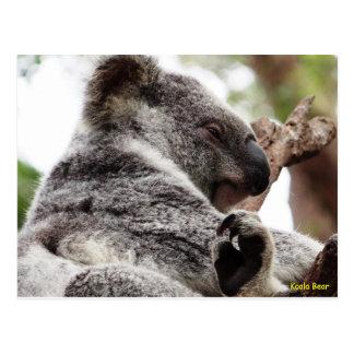 Australian Koala Bear Postcard
