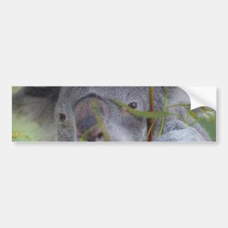 Australian Koala Bumper Sticker