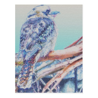 Australian Kookaburra Postcard