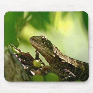 Australian lizard hiding between leaves, Photo Mouse Pad