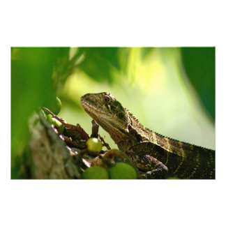 Australian lizard hiding between leaves, Photo Personalised Stationery