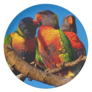 Australian Lorikeet photo plate