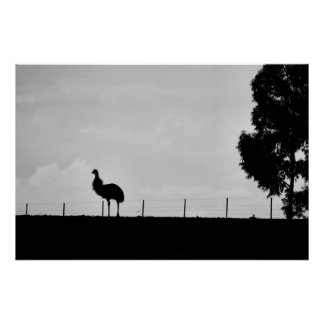 Australian Outback - Emu Posters
