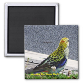 Australian Pale Headed Rosella Square Magnet