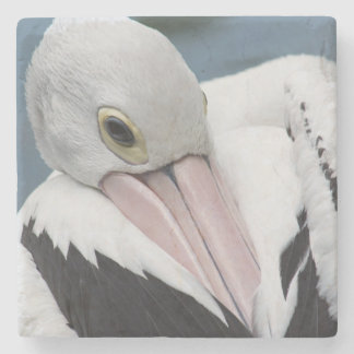 Australian pelican close up stone coaster