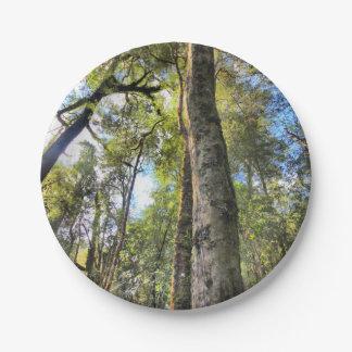Australian Rainforest Eucalyptus Gum Trees Paper Plate