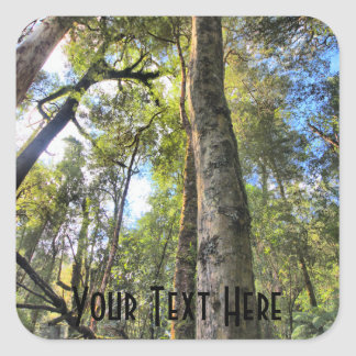 Australian Rainforest Eucalyptus Gum Trees Square Sticker