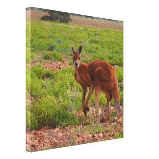 Australian red kangaroo canvas print