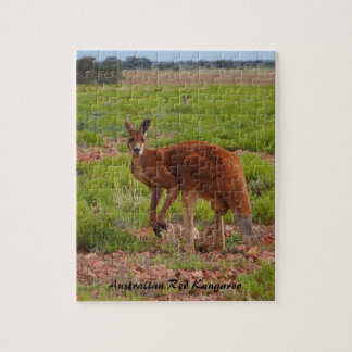 Australian red kangaroo jigsaw puzzle