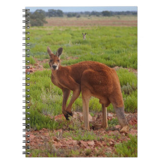 Australian red kangaroo notebook