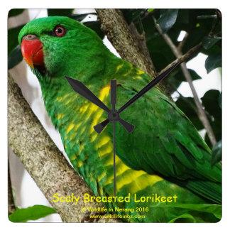 Australian Scaly Breasted Lorikeet Wallclocks