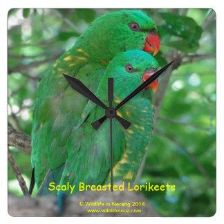 Australian Scaly Breasted Lorikeets Wallclocks