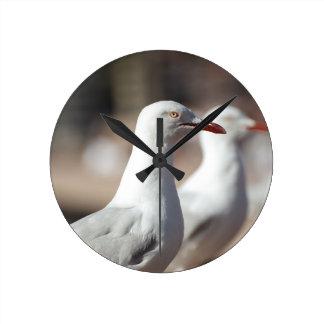 Australian seagulls at Sydney Harbour Wall Clocks