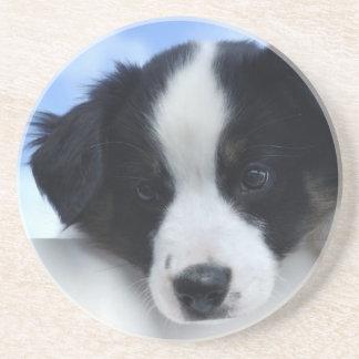 Australian Sheepdog Puppy Drink Coaster
